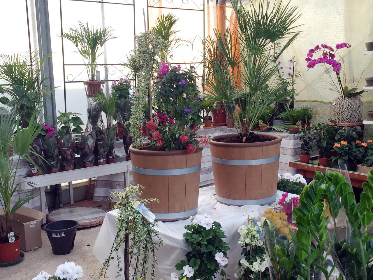 Öko-Blumenkübel Schökü-50 und Schökü-54 individuell bepflanzt von der Gärtnerei Blumen und Landschaftsbau Killat GbR
